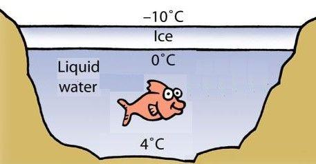 Resultado da  imaxen da propiedades da auga XEO FLOTANDO