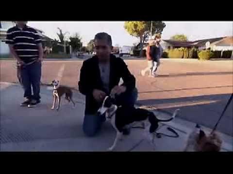 Kinderen opvoeden volgens methodiek van honden fluisteraar Cesar - Famme - Famme.nl
