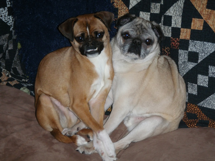 Dusty & Oscar .... and they called it Puppy Love!