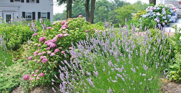 1000 images about plants we love on pinterest gardens for Cape cod landscape design