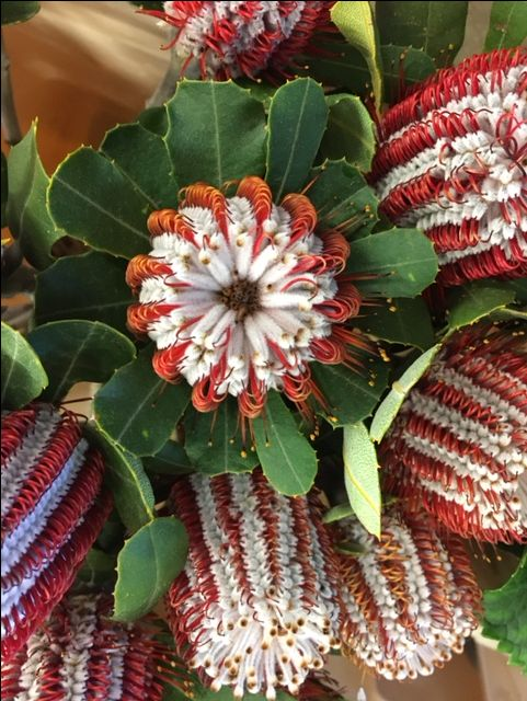 Banksia 'Coccinea'...Sold in bunches of 10 stems from the Flowermonger the wholesale floral home delivery service.