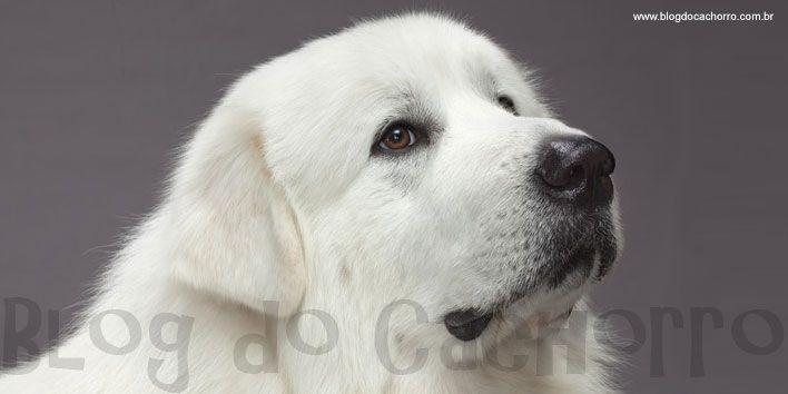 28 fotos de cães de raça - Blog do Cachorro