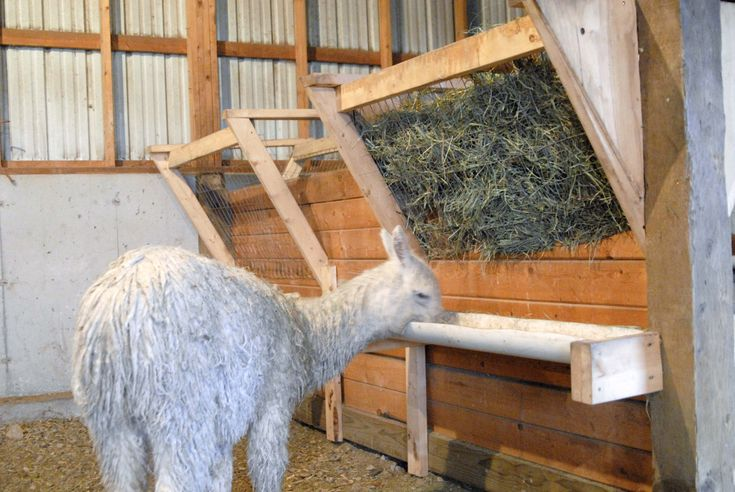 Best 25+ Hay Feeder ideas on Pinterest | Diy hay feeder ...