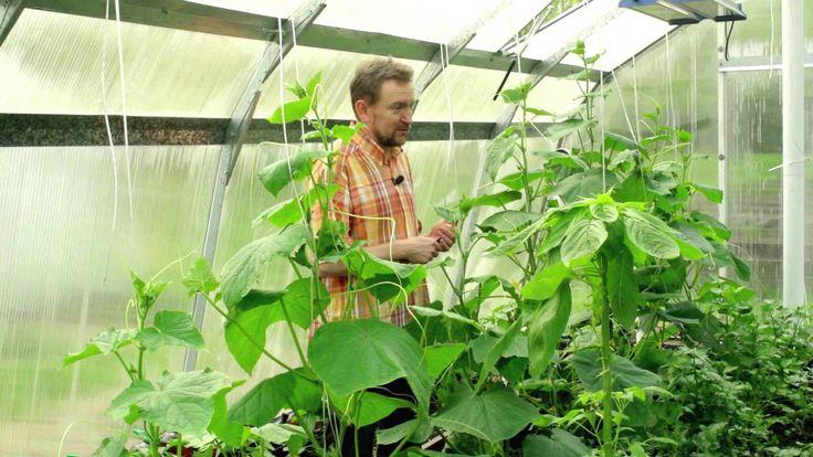 Использование скощенной травы как удобрение. Добрый урожай. Выпуск 16