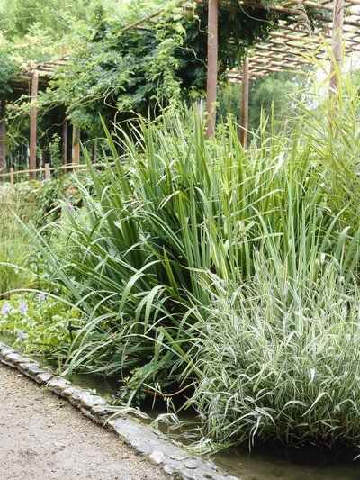 Bamboe Mooiwatplantendoen.nl