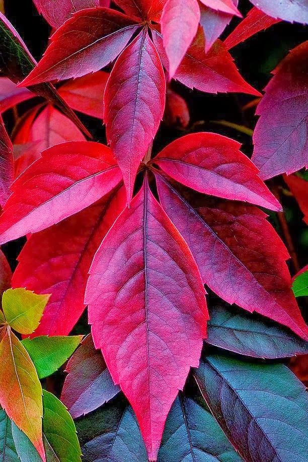 Hojas de otoño que nos regaláis calidez a través de vuestros colores...