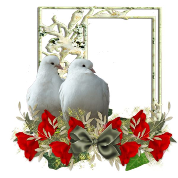 много свадебные голуби анимационные картинки цвета