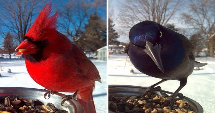 Βάζει ταΐστρες για Πουλιά έξω από το Σπίτι της και Περιμένει πότε θα Φάνε για να τα Φωτογραφίσει. Το Αποτέλεσμα; Μαγικό! Crazynews.gr
