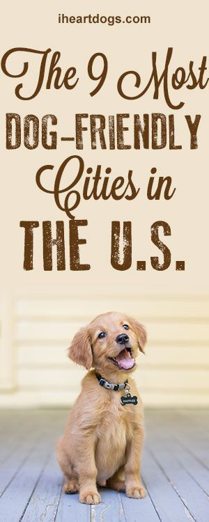 The 9 Most Dog Friendly Cities In The U.S.