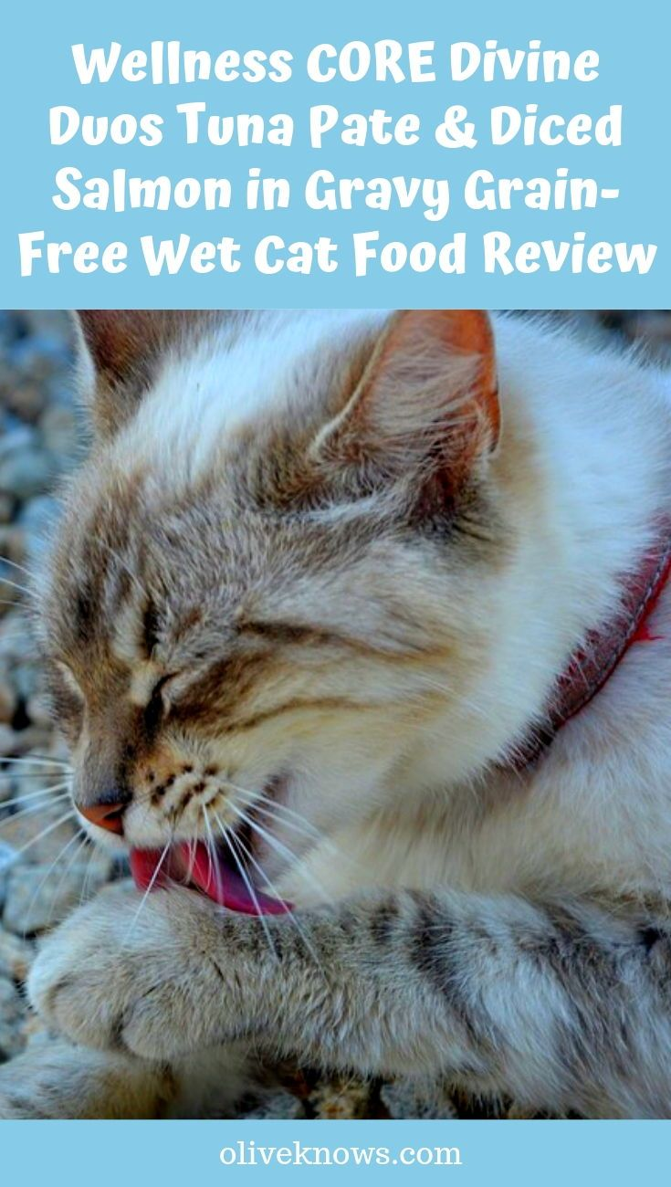 Wellness Core Divine Duos Tuna Pate Diced Salmon In Gravy Grain Free Wet Cat Food Review Cat Food Reviews Wet Cat Food Cat Food