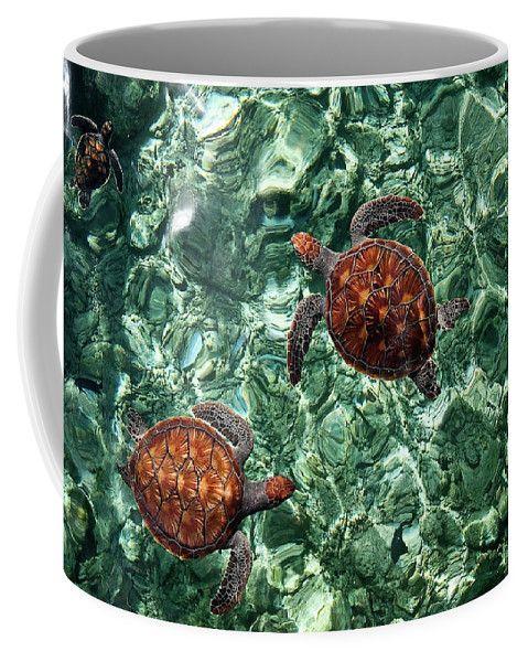 Fragile Underwater World. Sea Turtles In A Crystal Water. Maldives Coffee Mug by Jenny Rainbow.  Small (11 oz.)