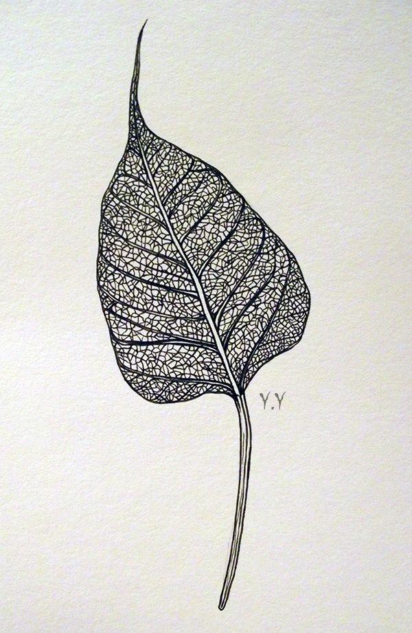 Bodhi leaf                                                                                                                                                                                 Mehr