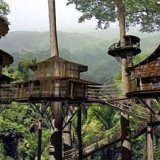 17 best images about exotic animals from costa rica on for Tree house for sale costa rica