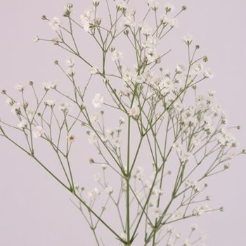 202 Best Baby S Breath Wedding Images On Pinterest