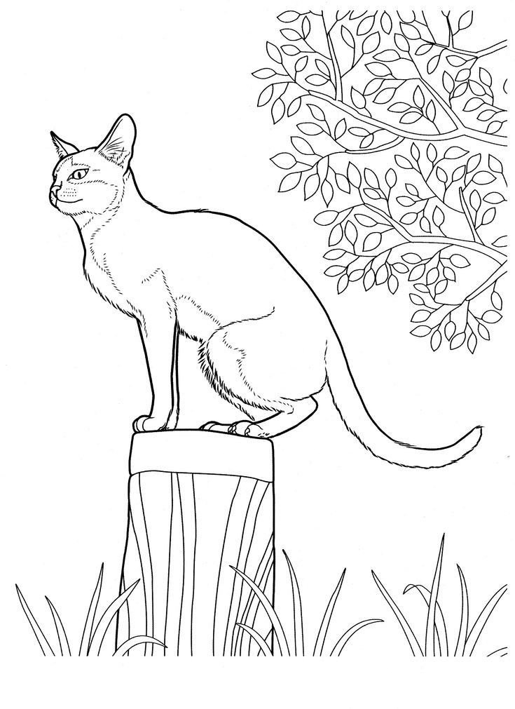 cat_12 Cats coloring pages for teens and adults