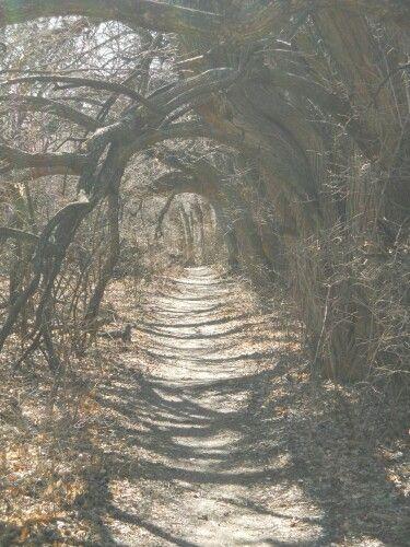 Chisholm Trail Nature Center Wichita Ks