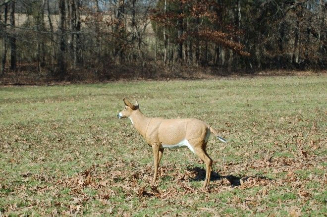 So You Want to Try a DeerDecoy? Placement and setup are keys to success.