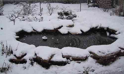 What You Need to Know about Pond Heater for Winter