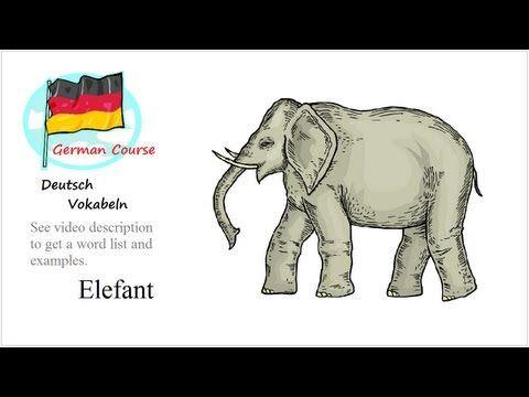Λεξιλόγιο Ζώα | Μάθετε γερμανικά σε απευθείας σύνδεση | να μάθουν το λεξιλόγιο