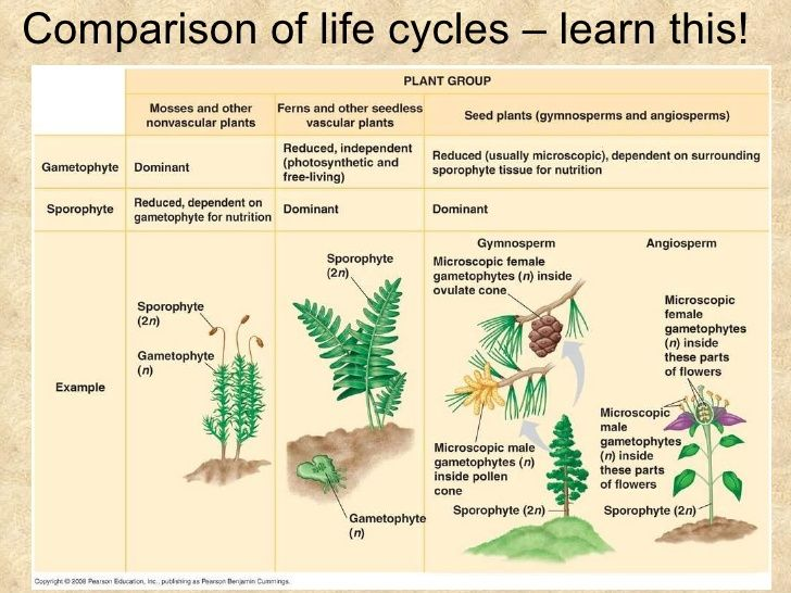 Chapter 38 - Angiosperm Reproduction and Biotechnology