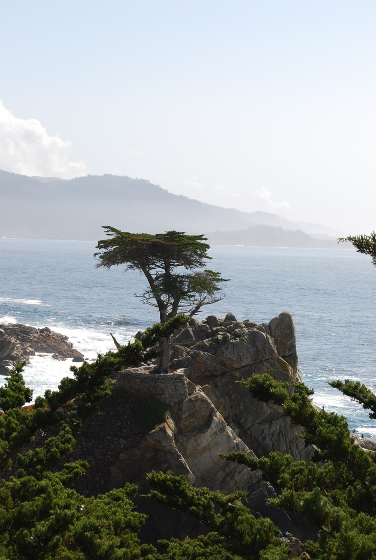 The Lone Cypress is an iconic part of the Pebble Beach coastline.