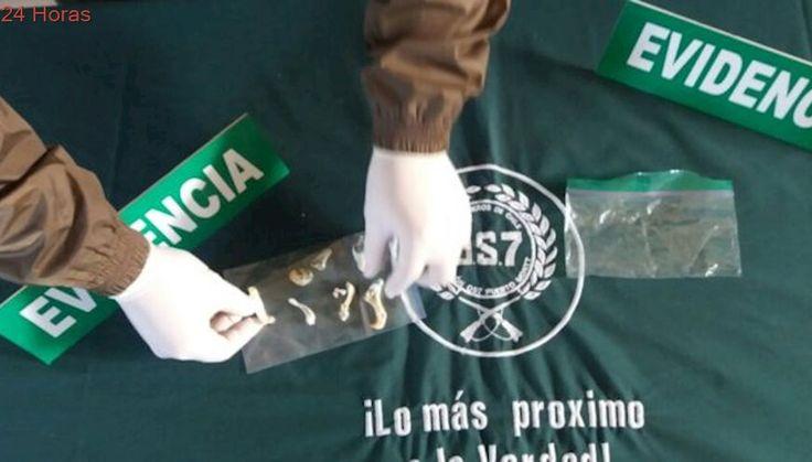 Incautan hongos alucinógenos durante procedimiento en aeropuerto de Puerto Montt