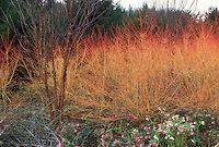 Winter interest garden | Plant & Flower Stock Photography: GardenPhotos.com