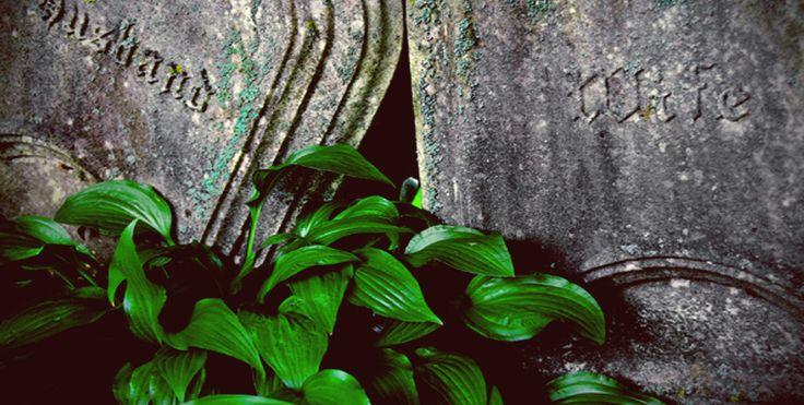 Rośliny na cmentarzach | Floral