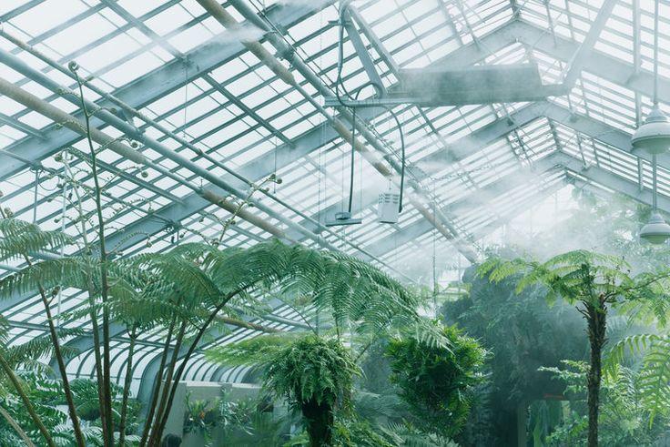 Greenhouse Project | LAR - Laurie-Anne Roux Photographe