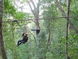 Treetop zip-lining in the Tsitsikamma National Forest - Knysna.  South Africa