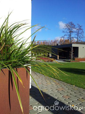 Moja codzienność - ogród Oli - strona 1097 - Forum ogrodnicze - Ogrodowisko