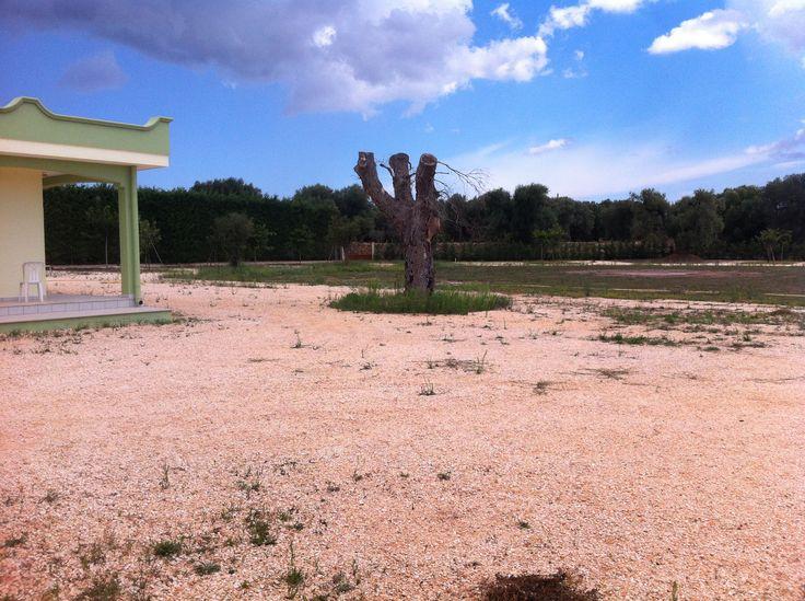 Zona Campeggio - Azienda Agricola Melillo