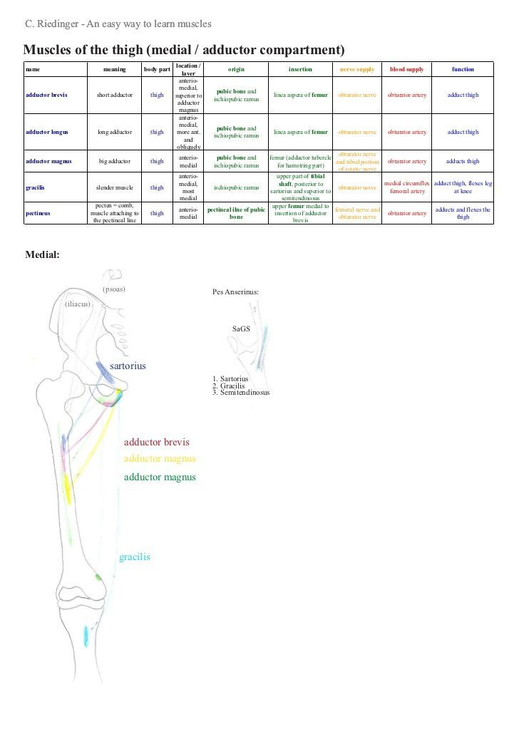 an analysis of muscle function and anatomy in sports And soft tissue of the knee that contribute to its stability and function  sports during a longitudinal seven year trial of recreational male and female exercisers  stabilisation is achieved through knee ligaments, while muscles around  analyses in anterior cruciate ligament reconstruction: a qualitative and.