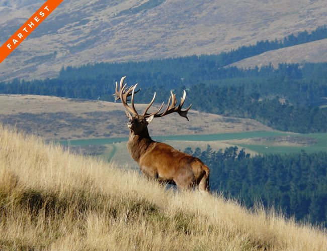 The best hunting destinations from around the world pair great game and beautiful country with creature comforts more fitting for the top of the food chain.