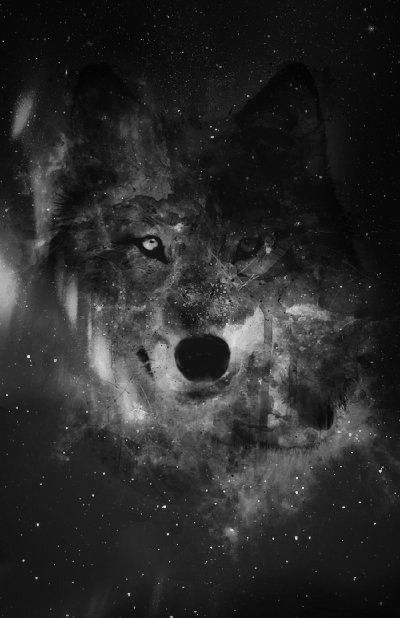 List Of Synonyms And Antonyms Of The Word Hipster Wolf Wallpaper