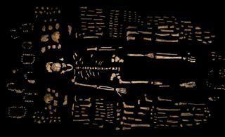 Scoperti in Sudafrica i resti di una nuova specie umana: ecco l'«Homo naledi»