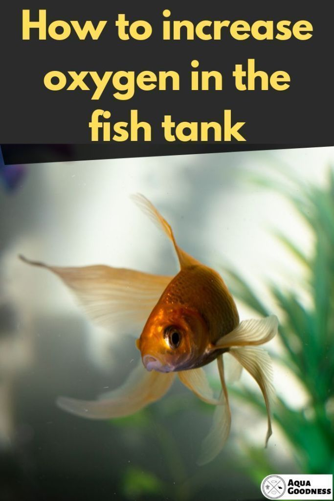 How To Increase Oxygen In Fish Tank 8 Simple Ways In 2020 Fish Tank Fresh Water Fish Tank Tropical Freshwater Fish