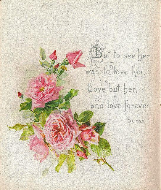 227 Best Images About Vintage Roses On Pinterest