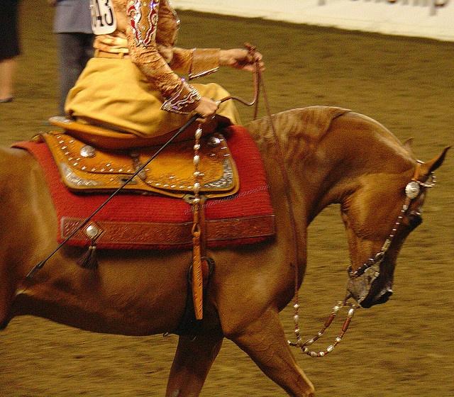 Western side-saddle. Awesome!