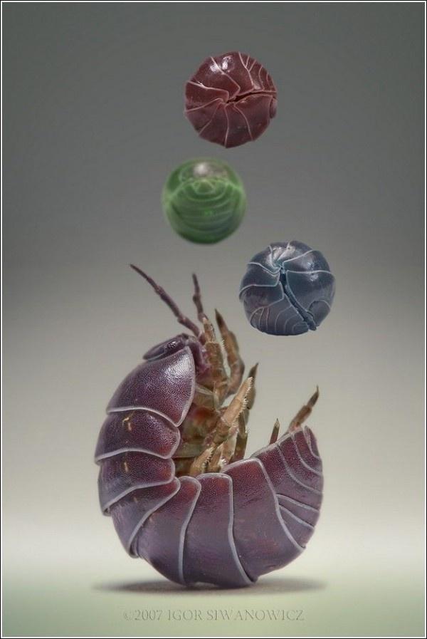 Amazing Insect Photography by Igor Siwanowicz