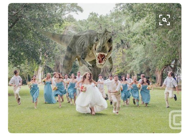 Crazy Wedding Photos, Creative Wedding Photography, Picture Ideas, Photo  Ideas, Ideas Para