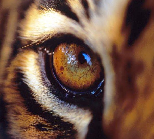 It's the eye of the tiger. It's the thrill of the fight.  Rising up to the challenge of our rivals.  And the last known survivor stalks his prey in the night.  The tone is raw power, the beat is brute force!