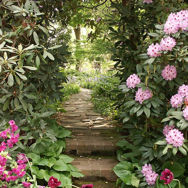 Best Rhododendrons In The Landscape Images On Pinterest Yards