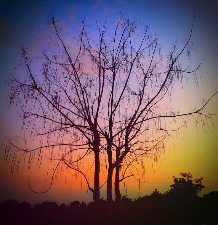 sunset, tree, silhouette, orange color, beauty in nature