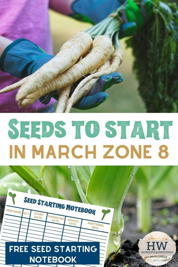 What Seeds To Start In March Seeds Starting Seeds Indoors Seed