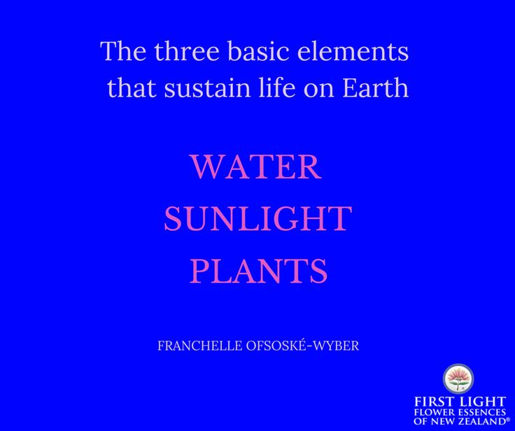 The three basic elements that sustain life on Earth are sunlight, water and plants.