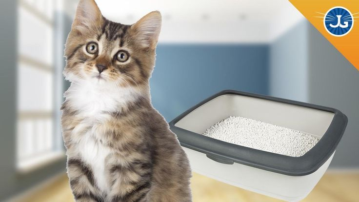 Why Do #Cats Pee/Poop Outside The Litter Box? There could be a few reasons why your cat has peed or pooped outside of the litter box and it is very important that you listen to your cat to solve the problem. This is their way of signaling to you that something is wrong — either with health or anxiety — and there are several ways to fix it: http://youtu.be/OFphS8VMNZc