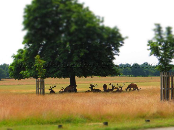 Richmond Park - London