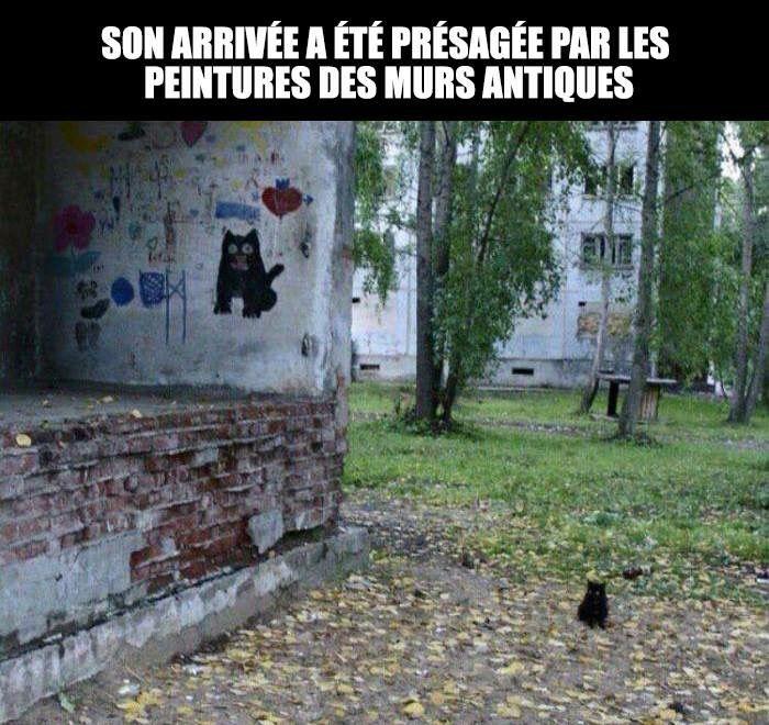 Ainsi la légende disait vrai... #animaux #chat #geek