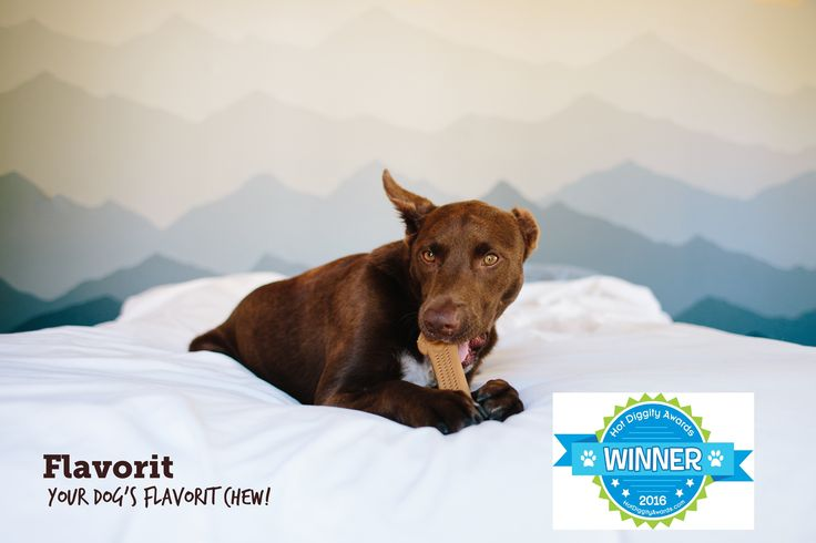 Mom always freaks out when I slobber on her 600 thread counts..🙊 . Pet Qwerks is proud to announce that Flavorit Bone has been awarded the 2016 Hot Diggidy Seal of Approval!